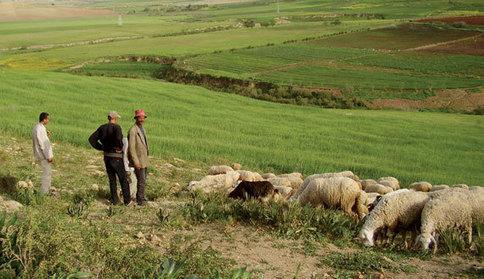 Développement agricole : Le bon exemple marocain