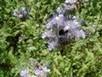 Mieux connaître les différentes espèces de couvert | L'œil de Dijon Céréales | Scoop.it