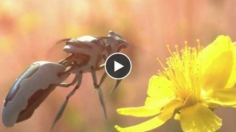 Des robots pour remplacer les abeilles ? Greenpeace lance une campagne choc | Greenwashing | Scoop.it