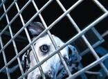 Los perros perdidos - El Periódico de Catalunya   Maltrato Animal   Scoop.it