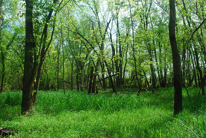 Green spaces may simulate meditation (study) | Mindful | EA7 Environmental issues | Scoop.it