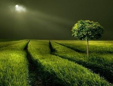 İslam Ahengi | Kuran | İbadet | Namaz | Dua: Asr-ı Saadette İman, Müminler ve İman Tarihi | İslam Ahengi | Scoop.it