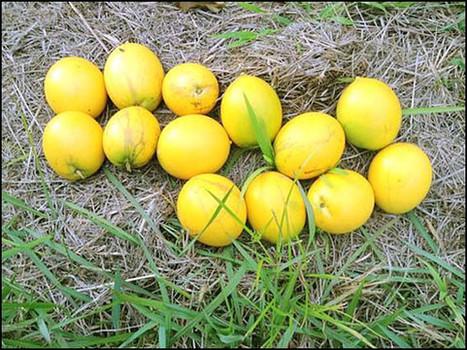 Oranges et jus de fruit à Tahiti | The Blog's Revue by OlivierSC | Scoop.it