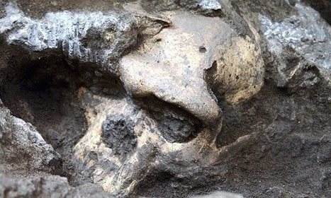 Skull of Homo erectus throws story of human evolution into disarray | Aux origines | Scoop.it