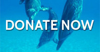 Take Action: Take the Pledge Not to Buy a Ticket to a Dolphin Show | Ric O'Barry's Dolphin Project | All about water, the oceans, environmental issues | Scoop.it