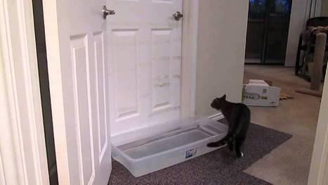 Knock Knock. Who's There? It's I Can Let Myself In Kitty! I ROFL Watching This, This Cat Knows How To Open Doors! | HotHotter | Scoop.it