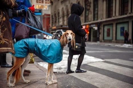 Tưng bừng triển lãm chó 2014 - Thức ăn cho thú cưng | nanapet | Scoop.it