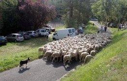Transhumance en Dordogne: les troupeaux quittent Campagnac le 31 juillet - Evénement - Camping Car | Agriculture en Dordogne | Scoop.it