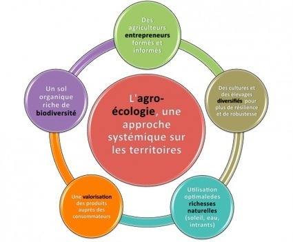 L'agro-écologie, le modèle agricole de demain | Autre gouvernance | Scoop.it
