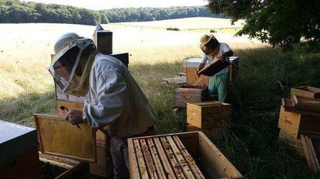 Comment la France perd ses abeilles (et leur miel) | Filière apicole française | Scoop.it