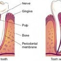 Triathlete Decay: Are your teeth slowing you down? | Dentistry | Scoop.it
