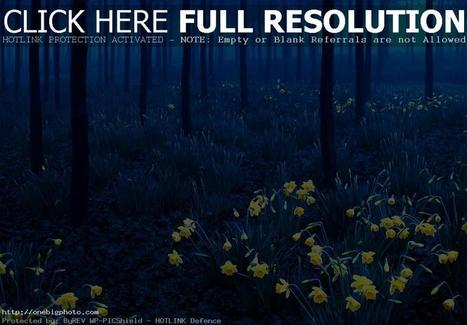 Most Beautiful Forests in The World | Awesome Photography | Scoop.it