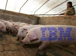 On the Internet of Things: IBM Tracks Your Pork From Farm to Fork. Starting with China | Web of Things | Scoop.it