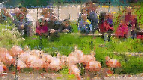 Flamingos | data glitching | Scoop.it