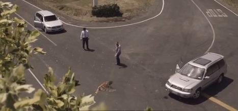 Sécurité routière : une communication choc et intelligente venue de Nouvelle-Zèlande…   Les Voitures   Communiquer en entreprise !!!   Scoop.it