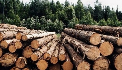 Russia Plans To Commit $400 Billion Roubles To Boosting Forestry Industry, Putin Says | Timberland Investment | Scoop.it