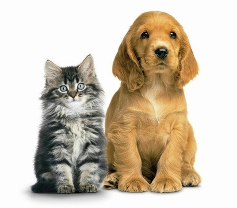 How To Help Your Pet Live Longer   SonnyRadio.com   Inspiration   Scoop.it