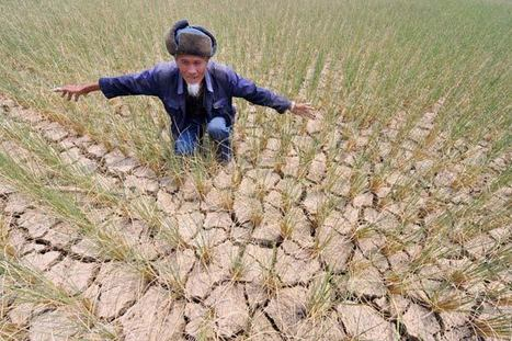 Climate change threatens China's crops|Economy|chinadaily.com.cn | Food issues | Scoop.it