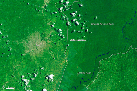 La déforestation aux Virungas vue par les satellites de la NASA | Virunga - WWF | Scoop.it