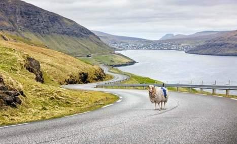 Cámaras en las ovejas para dibujar el mapa de las islas Feroe - 20minutos.es | Educacion, ecologia y TIC | Scoop.it