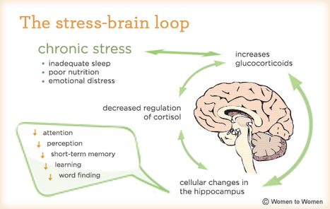 How Stress Can Change the Size of Our Brains and What We Can Do to Lower it - - The Buffer Blog | Achtergrondinformatie Werkconcept Critical Skills | Scoop.it
