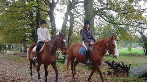 Des lycéens des MFR aux Jeux équestres mondiaux   Hédé-Bazouges   Scoop.it