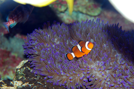 How the Tropical Fish Pet Trade is Harming Animals and Endangering Coral Reefs | All about water, the oceans, environmental issues | Scoop.it