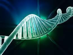 CRISPR-Cas targeted plasmid integration into mammalian cells via non-homologous end joining | Science Lovers | Scoop.it