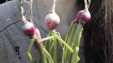Biologisch eten is goed fout | Verantwoord eten | Scoop.it