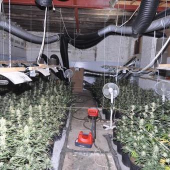 Encore un hangar avec 673 plants de cannabis à Charleroi! - La Nouvelle Gazette | Documentation Stupéfiante | Scoop.it