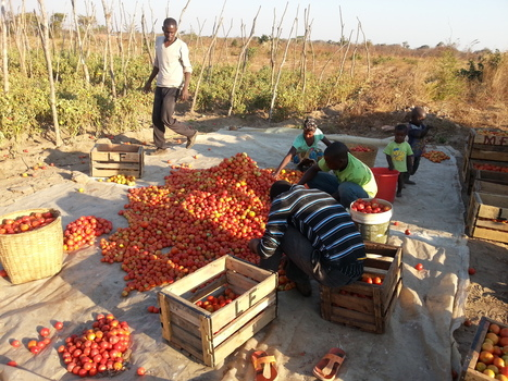 Defining the kind of agriculture Africa wants   NEPAD CAADP: Agriculture, Food Security and Nutrition in Africa   Scoop.it