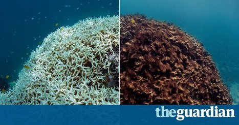 The Great Barrier Reef: a catastrophe laid bare | In Deep Water | Scoop.it