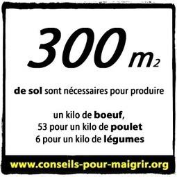 Le SAVOIR en image - Conseils pour maigrir | health fitness | Scoop.it