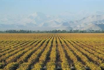 Chili : Progression de 6,5% des surfaces en vigne   vin   Scoop.it
