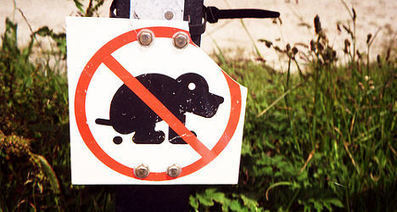 Spanish town mails dog poo back to owners - The Local | Curation Sensation | Scoop.it