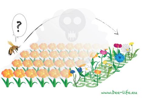 Bandes fleuries, cadeau empoisonné | Agroécologie | Scoop.it