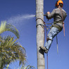 Custom Cut Tree Service