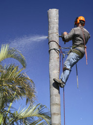 Custom Cut Tree Service offers top quality work in Middleburg, PA | Custom Cut Tree Service | Scoop.it