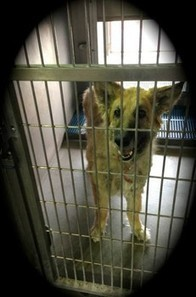 Dog, adopted from animal control as puppy, is returned as a senior | Nature Animals humankind | Scoop.it