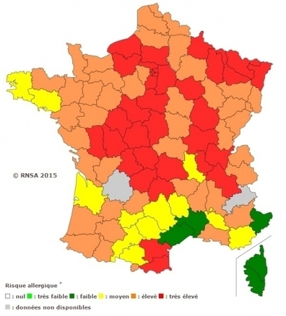 Risque allergique élevé en Charente pour les pollens de bouleau   Mairie d'Angoulême   Scoop.it