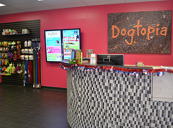 Why Open A Dog Daycare Business With Dogtopia? | orangecountydogbiz | Scoop.it