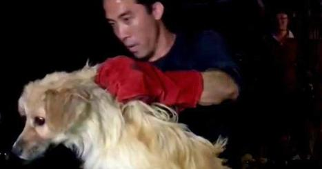 Man rescues 1,000 dogs from China's dog meat festival (GRAPHIC) | Nature Animals humankind | Scoop.it
