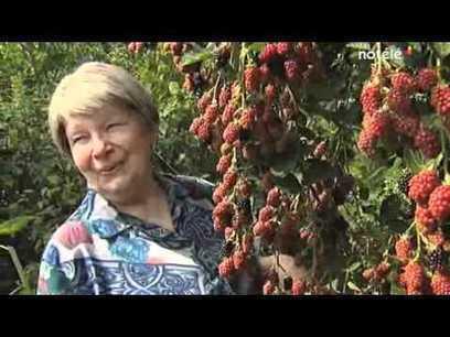 Belgique : 1800 m² de forêt où tout est comestible! | Confidences Canopéennes | Scoop.it