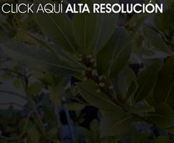 Plantas medicinales | Herbolaria | Scoop.it