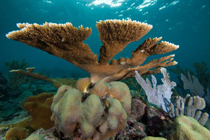 What a Waste: Human Sewage Is Laying Waste to Coral Reefs | Cool Green Science: The Conservation Blog of The Nature Conservancy | MWA 3 | Saving the Corals | Scoop.it