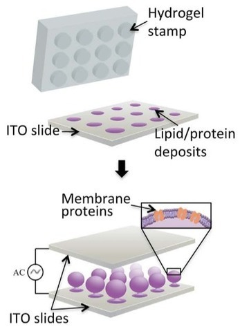 Microprinting low-cost artificial cells | KurzweilAI | Longevity science | Scoop.it