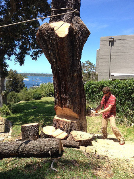 Performing Tree Removal Is Not Always Easy | Private and Public Place  - Tree Removal Expert Service | Scoop.it