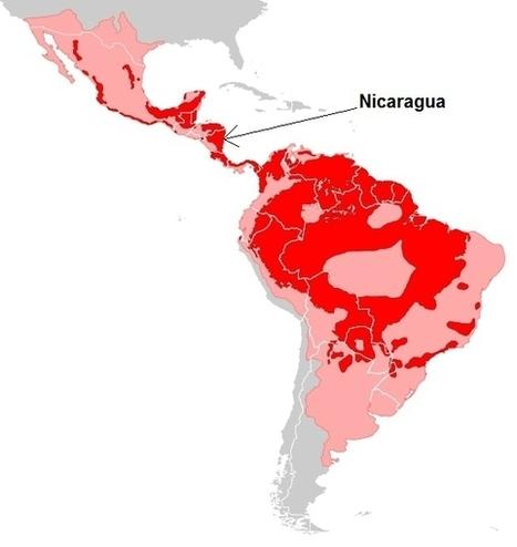 Le Nicaragua s'engage pour la sauvegarde des jaguars - Faune, nature, zoos & biodiversité | Nouvelles d'Amérique centrale | Scoop.it