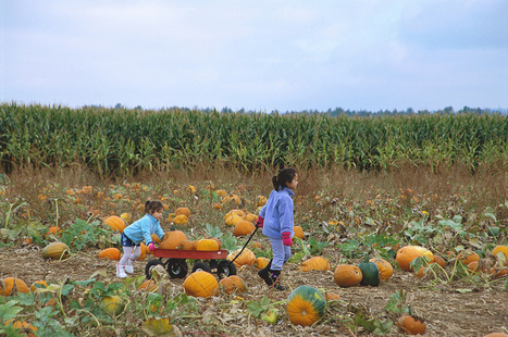 Learn Spanish with Pictures – A Pumpkin Patch | Education Resources | Scoop.it