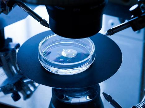 First GM human embryos 'could be created in Britain within weeks' | Knowmads, Infocology of the future | Scoop.it